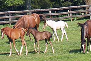 Horse Farms for Sale in Virginia