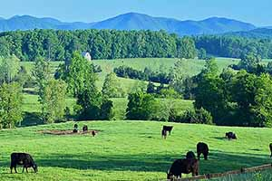 Cattle Farm for Sale in Va