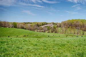 Cattle and Crop Farm in Madison County Virginia for Sale