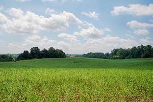 Farm in Madison County VA for Sale